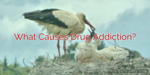 What Causes Drug Addiction? Why Doesn't Drug Abuse Lead To Addiction For Everyone?